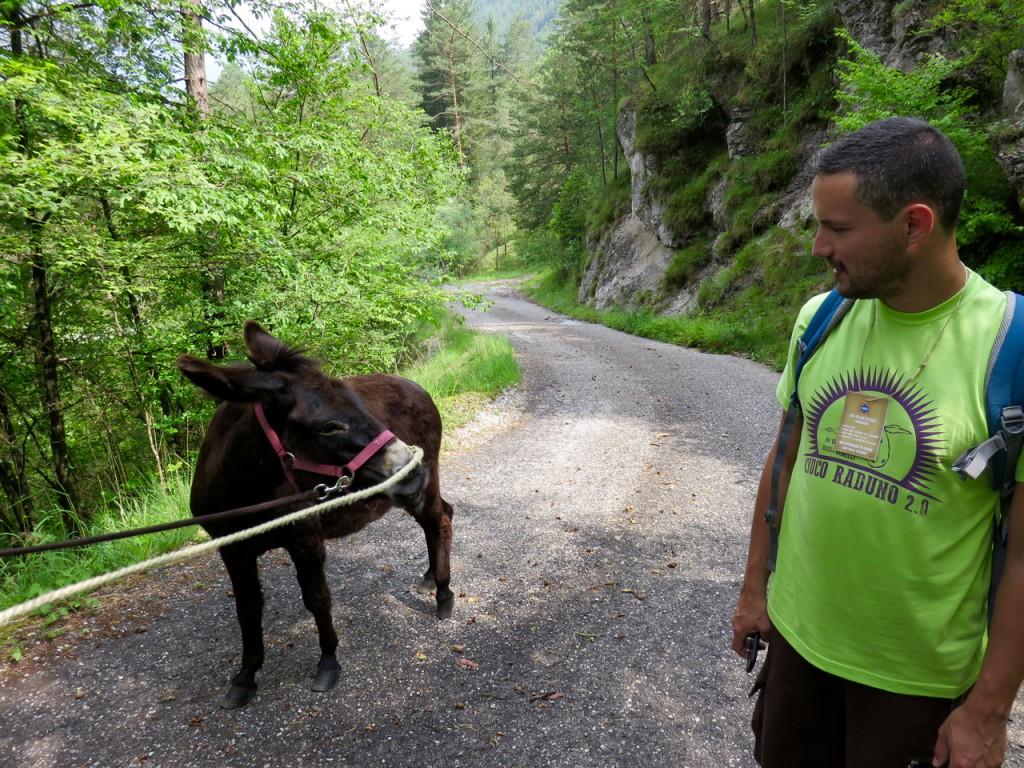 Luca Vivan, eco blogging, ciucoraduno, trekking Val Tramontina, asino, Pordenone, Friuli