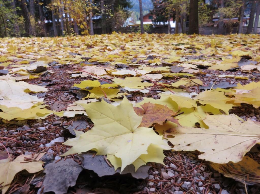 Luca Vivan, eco blogger, ben-essere, Sud Tirolo, Alto Adige, Villabassa, foliage