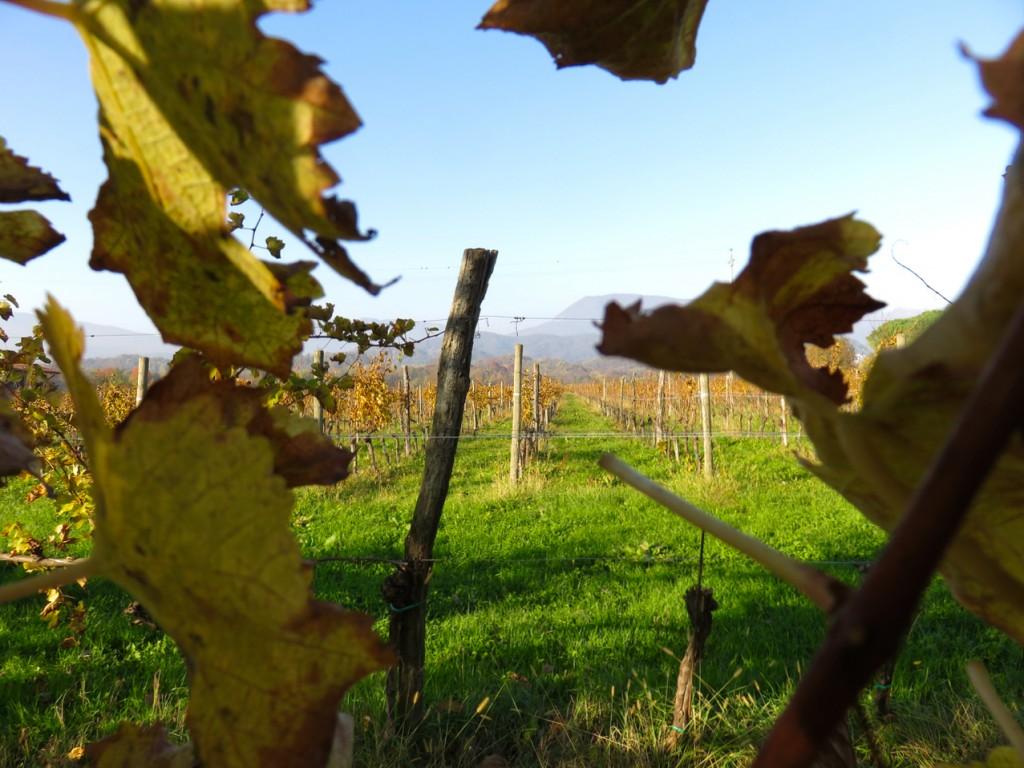 Luca Vivan, travel blogger, Francesca Zonta, Maniago, Val Cosa, Ecomuseo, Lis Aganis, Pordenone, Friuli, vitigni autoctoni