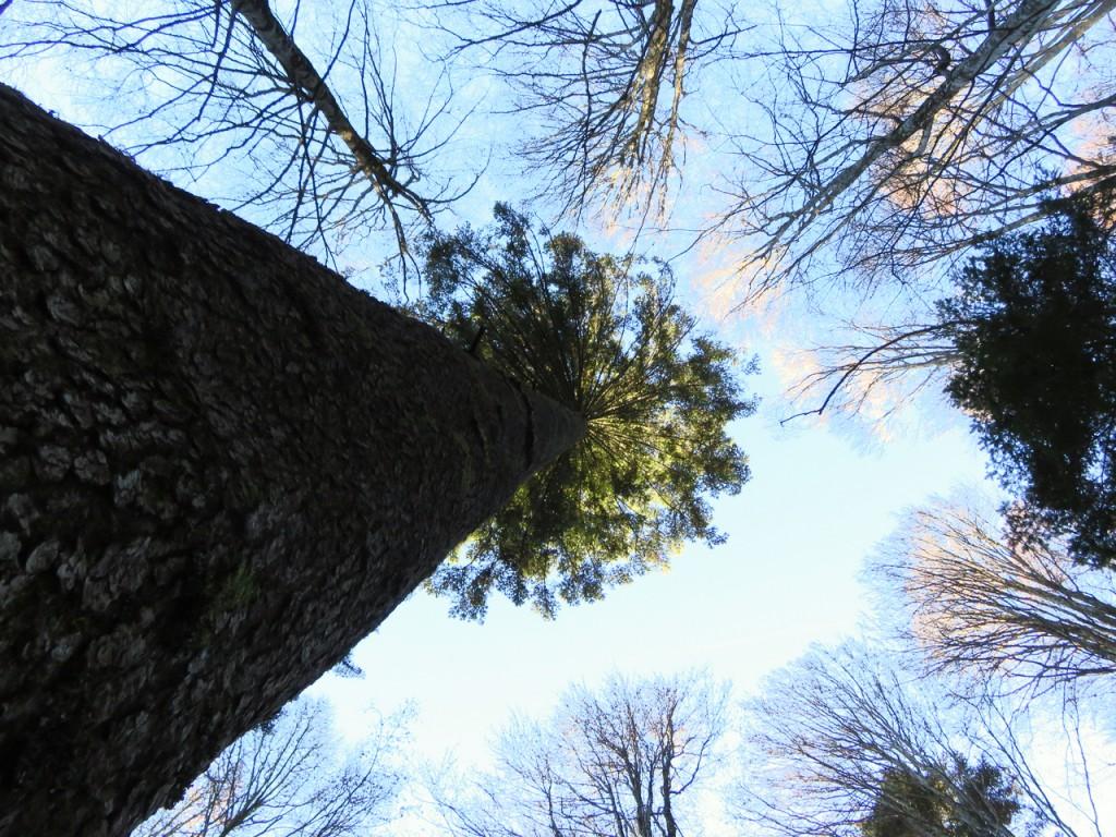 Luca Vivan, bosco, Cansiglio, il segreto del bosco vecchio, Dino Buzzati, turismo consapevole