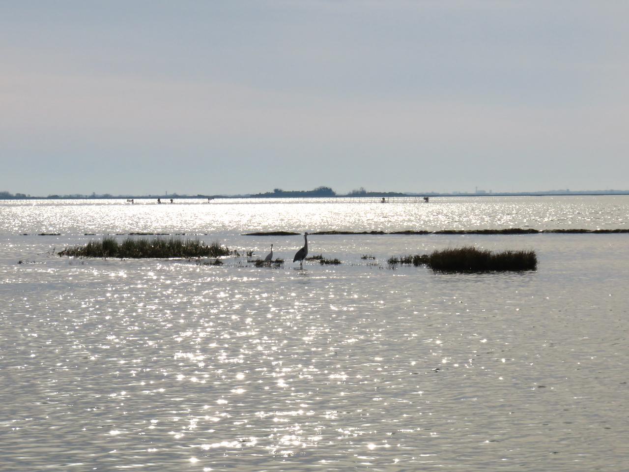 Venezia, origini di Venezia, Torcello, Slow Venice, biodiversità laguna