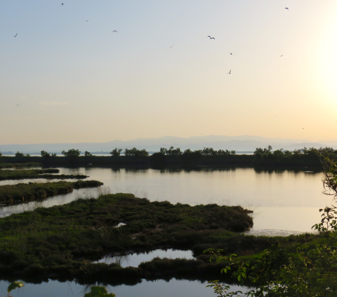 Grado, followGrado, TBnet, laguna di Grado, valle del Moro, Carso