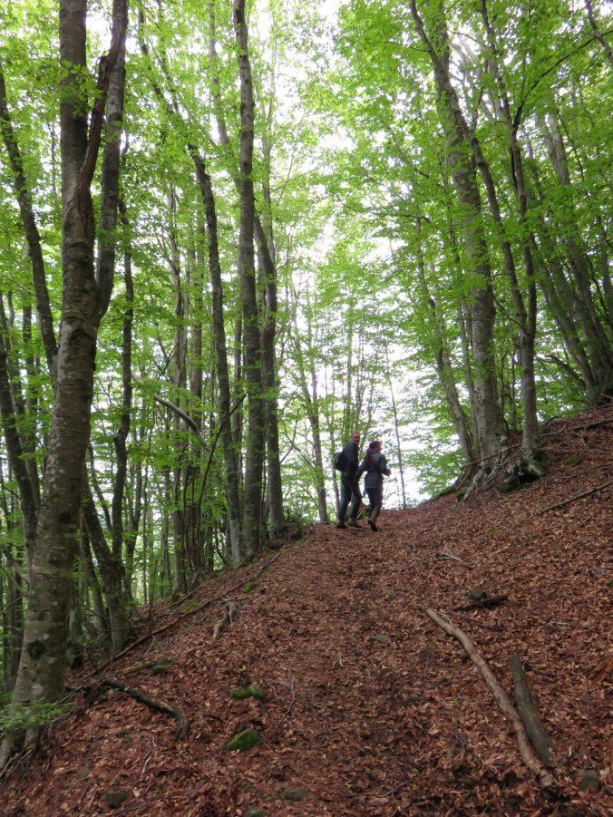del Casentino, monte Falterona, sorgenti dell'Arno, Parco Foreste Casentinesi, Arezzo, Toscana