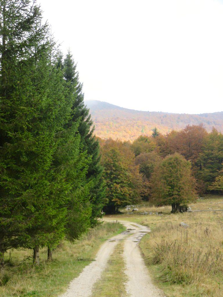 autunno, Piancavallo, Friuli-Venezia Giulia, Pordenone, foliage