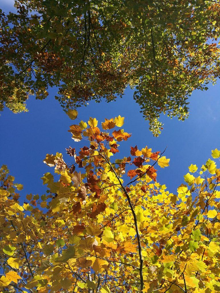 autunno, foliage, Pordenone, parco del seminario Pordenone, Friuli-Venezia Giulia, autunno