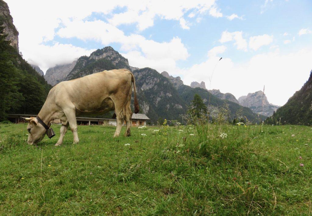 Alpi segrete, Val Cimoliana, Dolomiti friulane, Friuli Venezia Giulia, pian pagnon, malghe Friuli