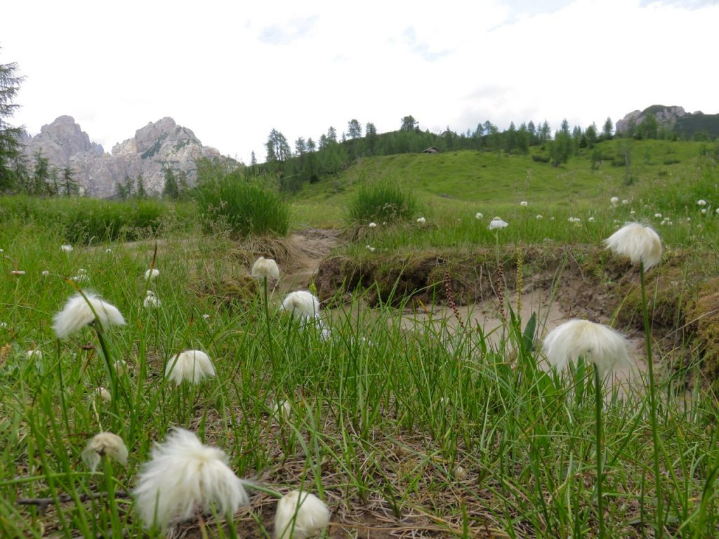 http://www.lucavivan.com/wp-content/uploads/2017/04/Sciamanesimo-Friuli-Friuli-Venezia-Giulia-Dolomiti-Friulane-Val-Cimoliana-benandanti.jpg