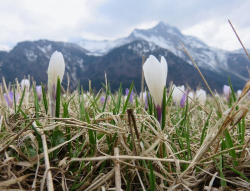 Il legame con la terra, lo sciamanesimo in Friuli
