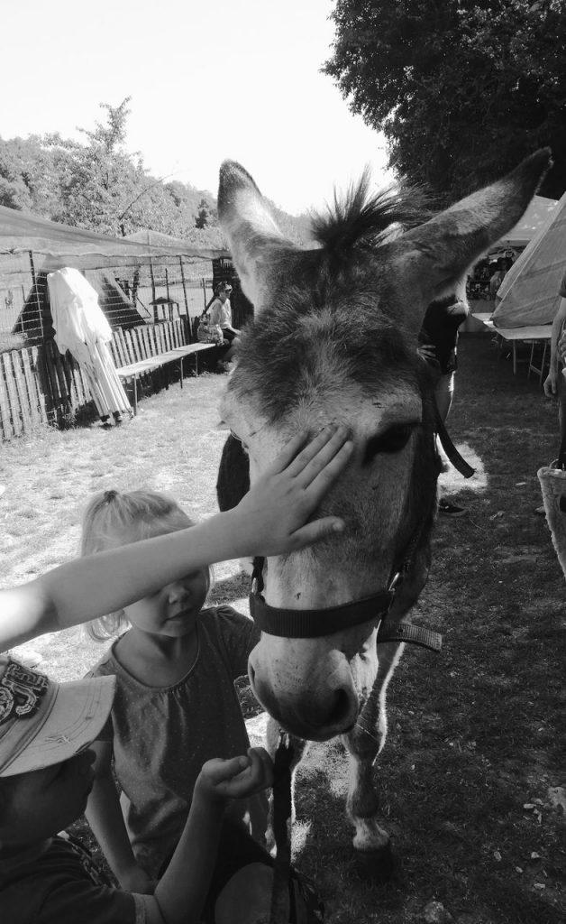 Ciuco Raduno, Parco Rurale San Floriano, Polcenigo, Friuli-Venezia Giulia, donkey, asino, turismo lento, ecoturismo