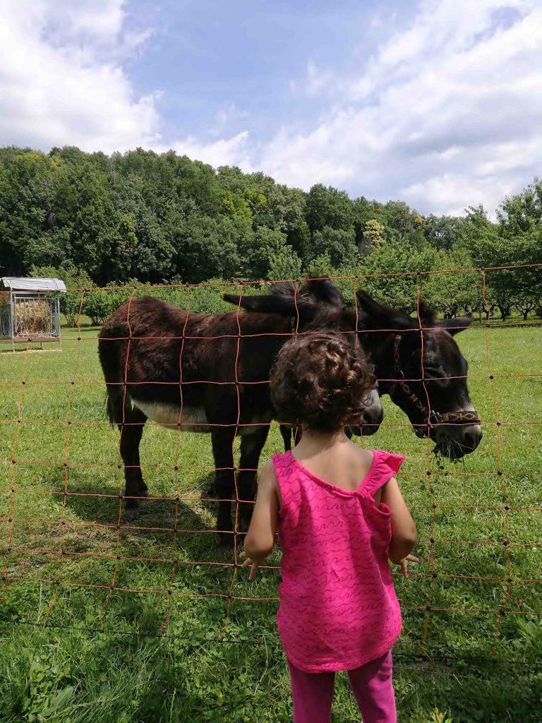 Ciuco Raduno, Parco Rurale San Floriano, Polcenigo, Friuli-Venezia Giulia, donkey, asino, turismo lento, ecoturismo, Compagnia degli Asinelli, bambino