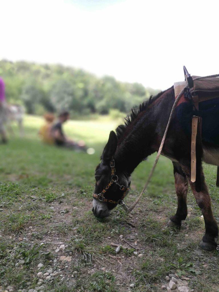 Ciuco Raduno, Parco Rurale San Floriano, Polcenigo, Friuli-Venezia Giulia, donkey, asino, turismo lento, ecoturismo, slow living