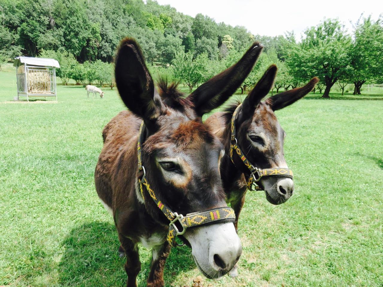 Ciuco Raduno, Parco Rurale San Floriano, Polcenigo, Friuli-Venezia Giulia, donkey, asini, turismo lento, ecoturismo