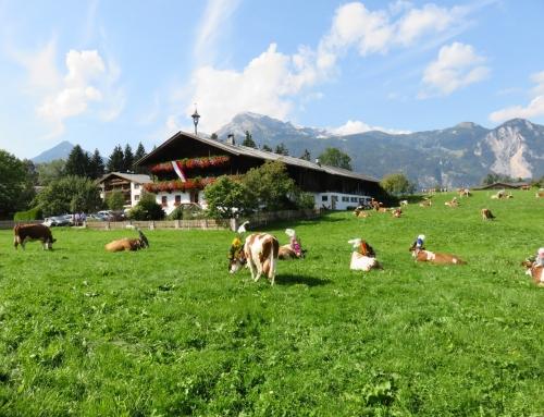 La natura e la cultura nell'Alpbachtal in Tirolo