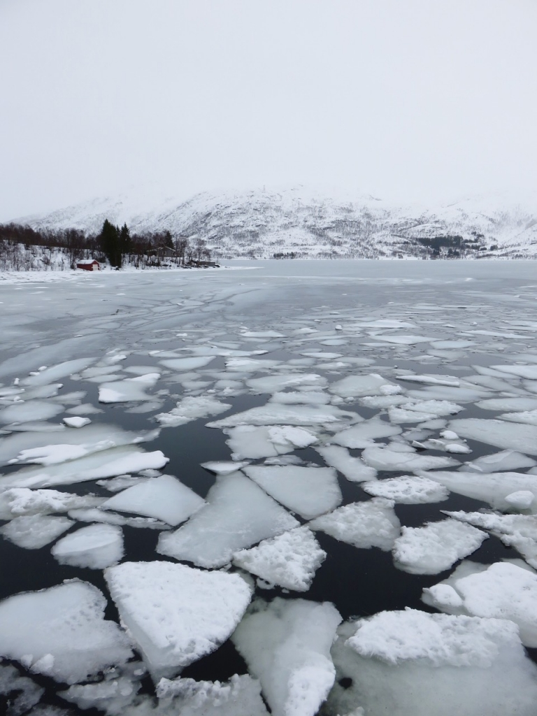 Ecoturismo Norvegia, Norvegia del nord, Norvegia, Norway, Nordland, Norge, Andøya, Andenes