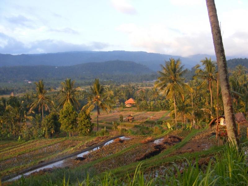 Odorico da Pordenone, Bali, Indonesia, risaie Bali