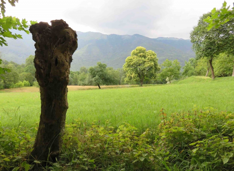 ciucoraduno, parco rurale san floriano, polcenigo, pedemontana pordenone, compagnia degli asinelli