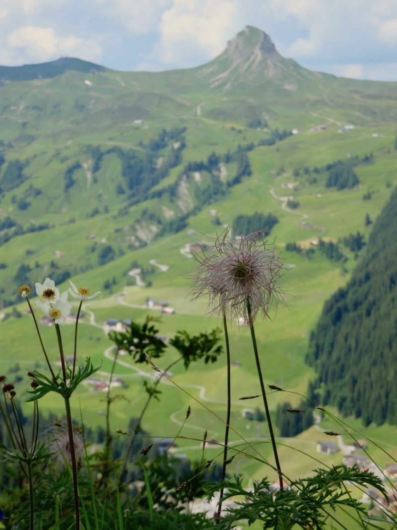 Faschina, Grosses Walsertal, Biosfera Grosses Walsertal, nel Vorarlberg, Vorarlberg, Austria