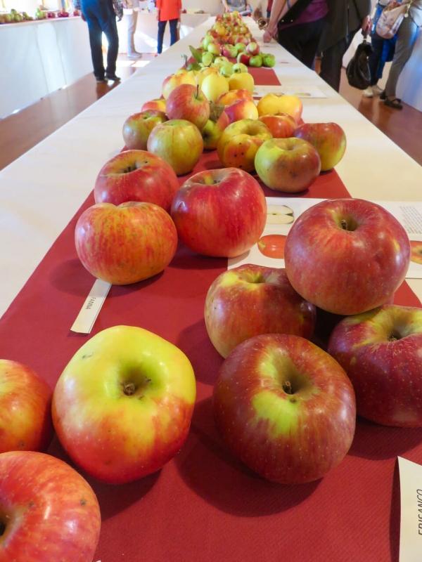 mele antiche, mele antiche friulane, mostra itinerante mele antiche, meduno, Friuli