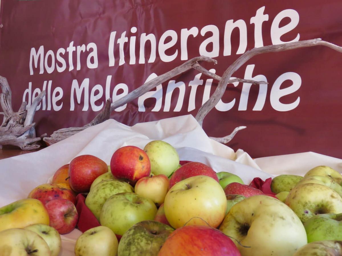 mele antiche, mele antiche friulane, mostra itinerante mele antiche, palazzo colossis, meduno
