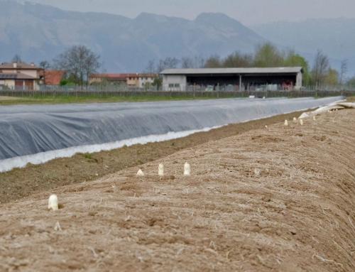 Il salotto dell'asparago di Cordenons, una festa del territorio del Friuli