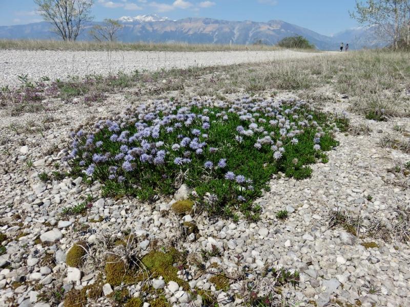 Magredi, Vivaro, steppa Friuli Venezia Giulia, macchia di fiori e due persone che camminano