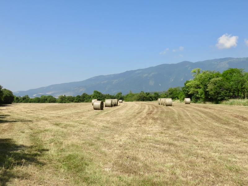 pedemontana Friuli, Budoia
