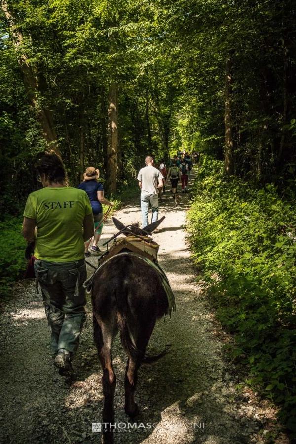 trekking con asini, compagnia degli asinelli, ciucoraduno, cammino san cristoforo, Friuli, asini in cammino nei boschi della Pedemontana Friuli