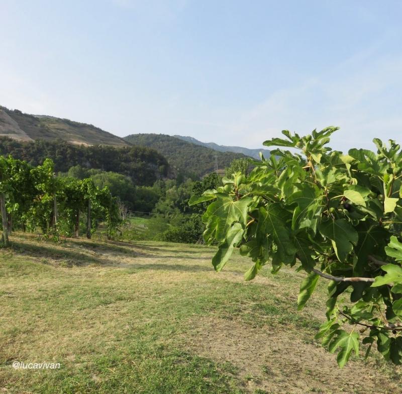 figo moro, Caneva, Pordenone, Friuli, Slow Food, Pedemontana pordenonese
