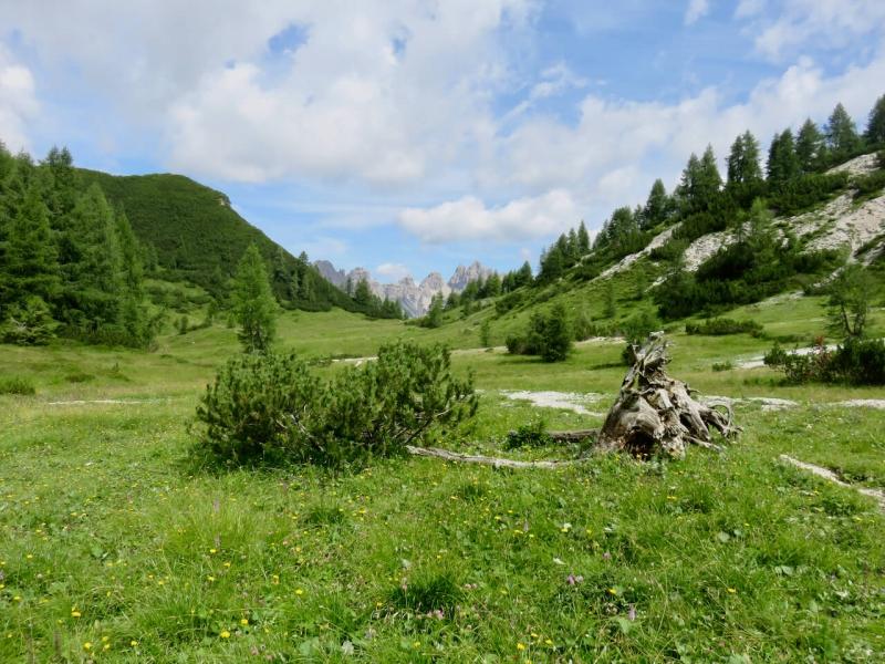 fine estate Friuli, forcella Savalons, dolomiti friulane, tronco di legno nella radura