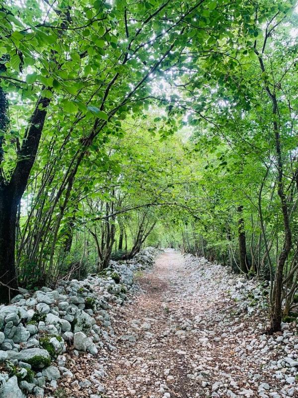 fine estate Friuli, un sentiero nel ruial di Dardago, Friuli