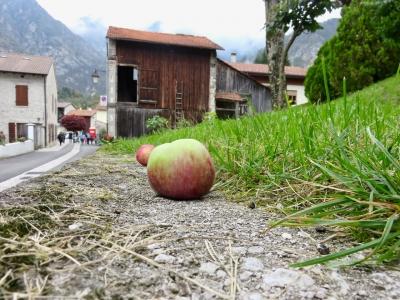 mostra mele antiche, andreis, mele per terra in paese di montagna friulana