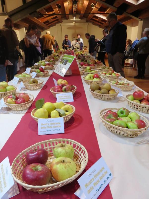 mostra mele antiche, tavolo con antiche varietà di mele in mostra