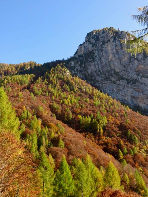 val zemola sopra Erto, boschi d'autunno sul Monte Porgeit