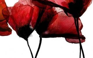 il monaco che disegnava fiori, racconti di cura Luca Vivan, fiore di papavero ad acquarello