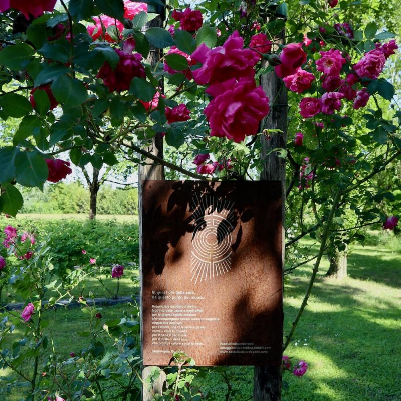 labirinto di rose damascene nel castello di Cordovado.