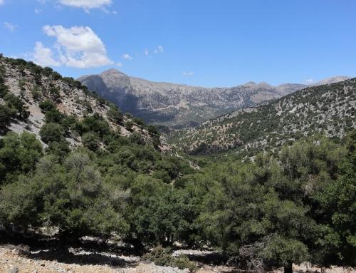 L'isola che C'è: un viaggio nella Creta alternativa