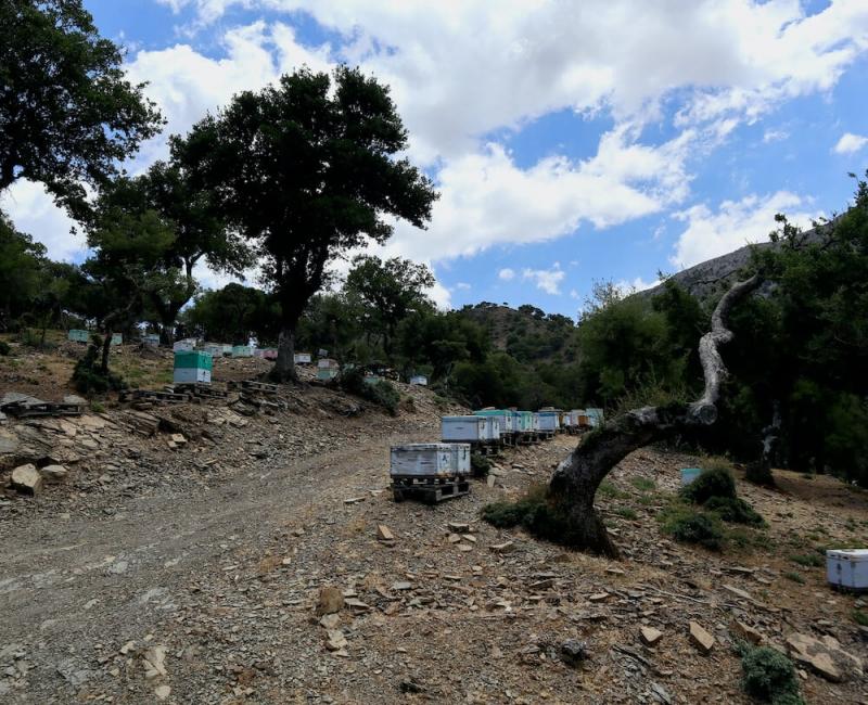 gergeri, bosco rouvas, apicultura biologica Creta