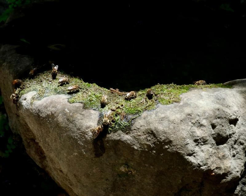 gola santo antonio ano asites, api su fonte storica creta